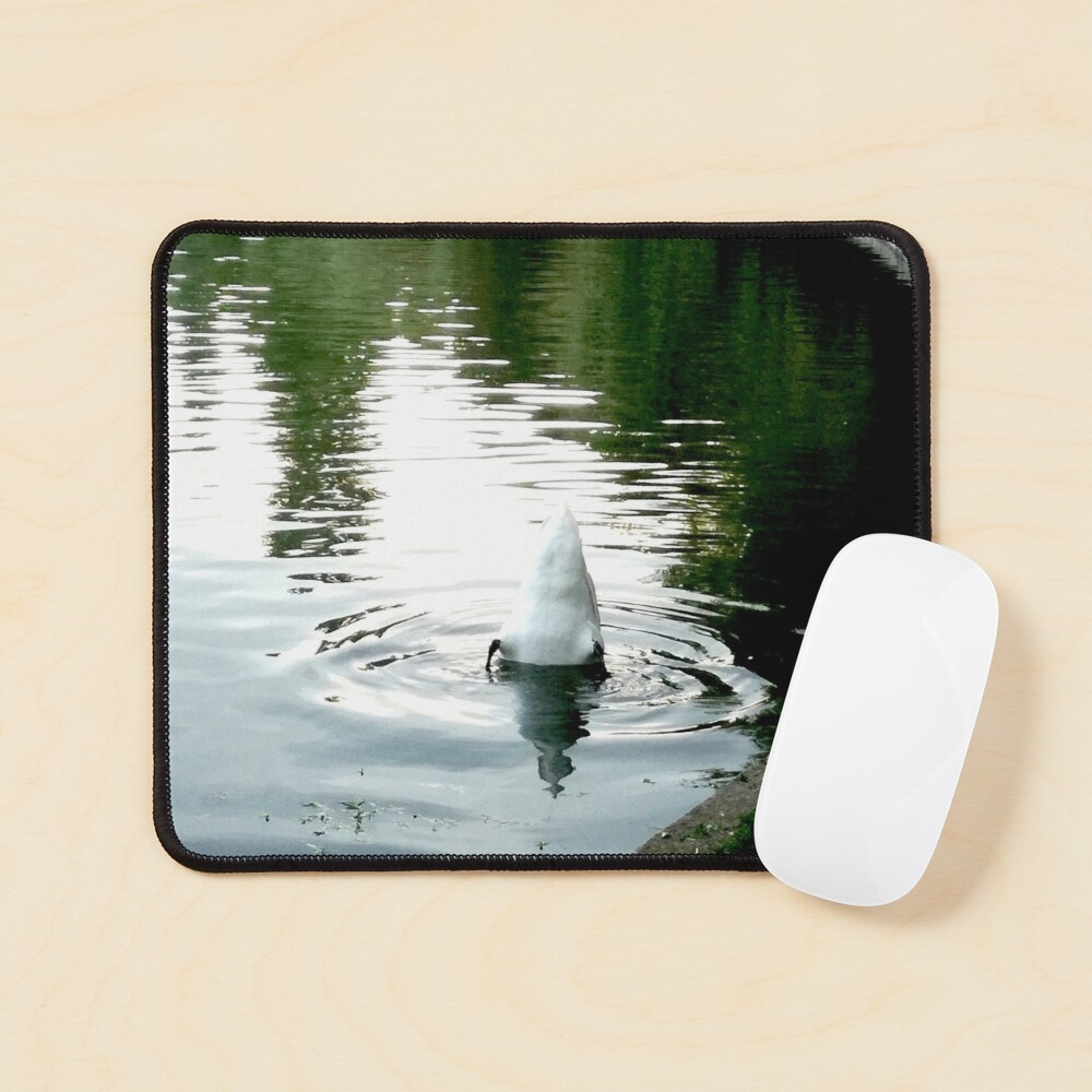 Duck with its head in the water and its white tail up on a lake with water with green reflections from the willows on the edge and blue from the sky Mouse Pad