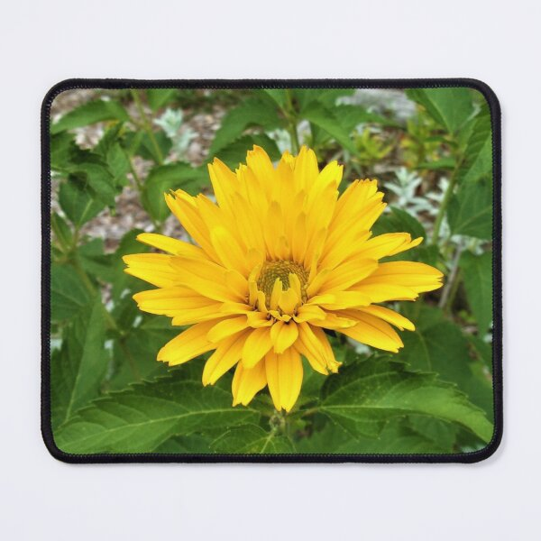 Sun in the Garden Mouse Pad