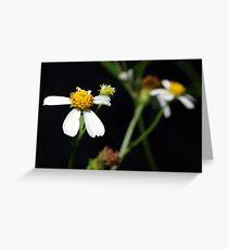 Bidens alba Greeting Card