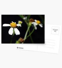 Bidens alba Postcards