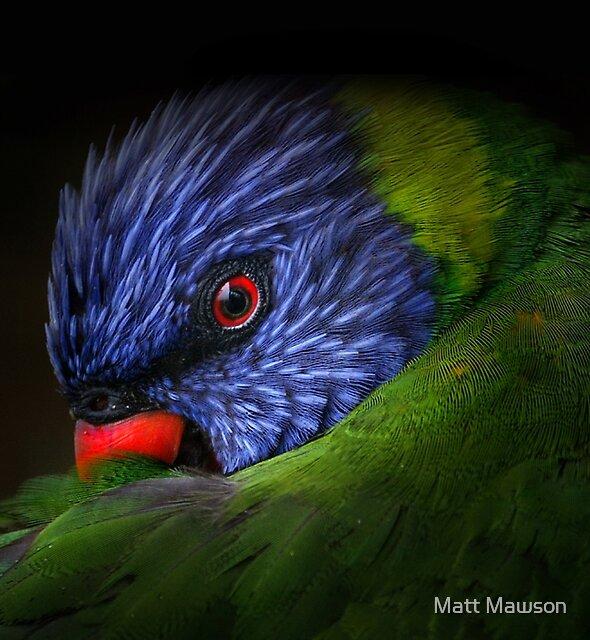 lorikeet by Matt Mawson