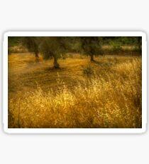 Golden corn in the olive grove Sticker