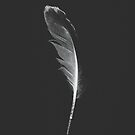 Gull Feather Collection no. 1 by Bethany Helzer