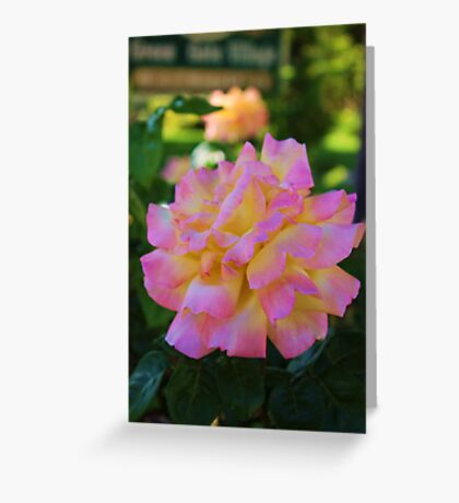 Merry Rose Greeting Card