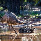 Old Man Emu and Chicks by Janette Rodgers