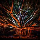 Night of the Banyan by Paul Mercer