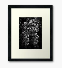 Backyard Flowers In Black And White 21 Framed Print