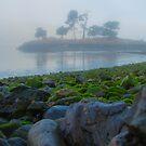Foggy Island Morning by Shari Galiardi