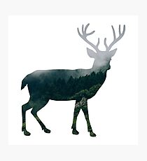 Buck Deer with Misty Evergreen Forest Woods Silhouette - Spirit of the Wild .  Photographic Print