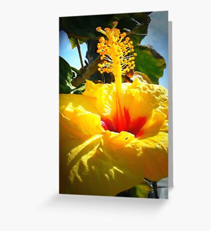 Earth laughs in flowers. ~ Ralph Waldo Emerson Greeting Card