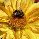 Autumn Pollenator by shutterbug2010