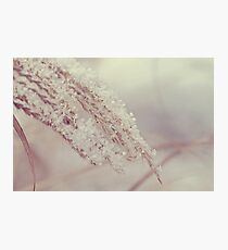 The Weight of Winter Photographic Print