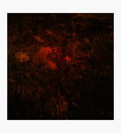 Bloodflower Photographic Print