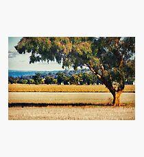 Rural NSW Photographic Print