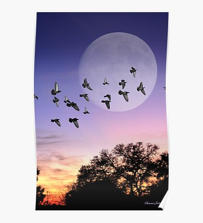 A Gathering of the Flock at Sunset Poster