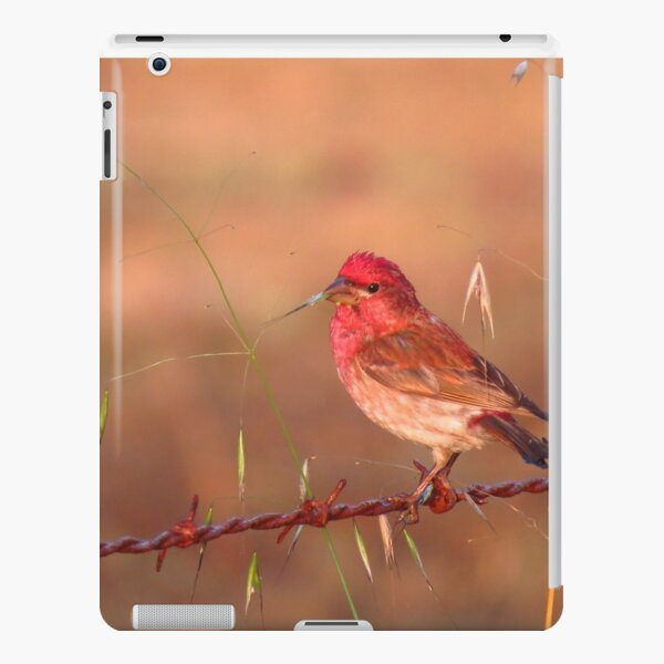 House finch eating oats iPad Snap Case