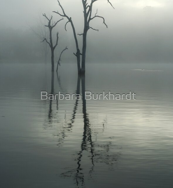 Sign of the Sun by Barbara Burkhardt