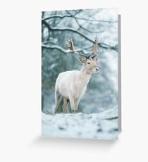 Christmas fallow buck in the snow Greeting Card