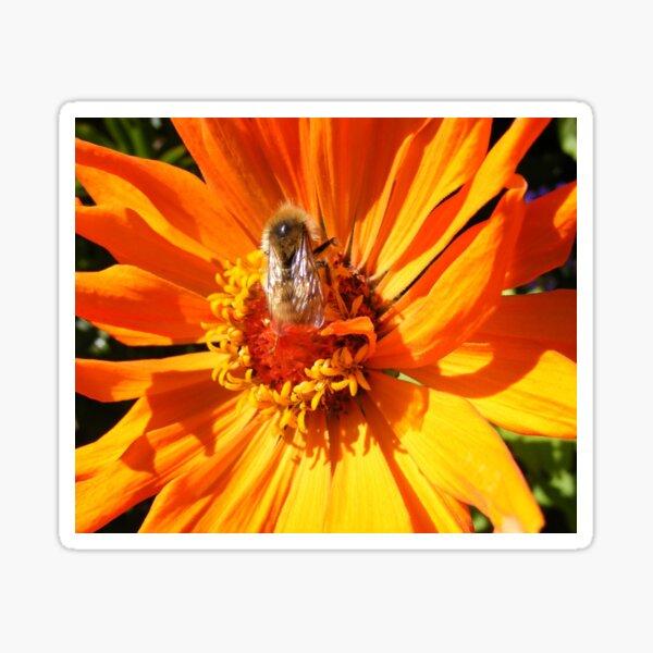 ORANGE DAHLIA BLOSSOM PETALS WITH BEE Sticker