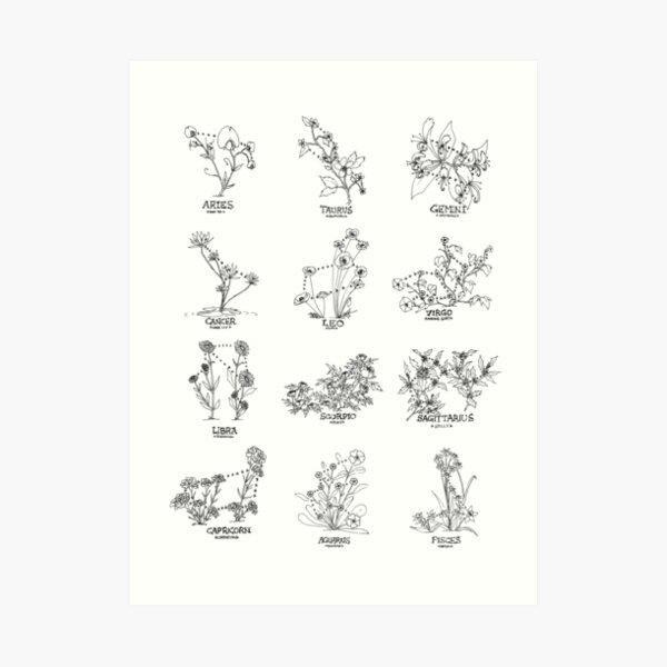 Floral Constellation - Ensemble Art Print