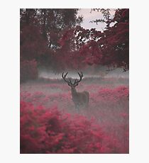 Another Stag, Another Planet 2 Photographic Print