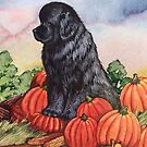 Newfie Harvest by Patricia Reeder Eubank