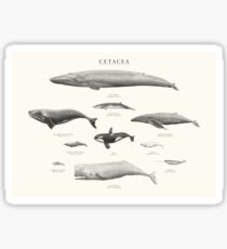 Cetacea Sticker