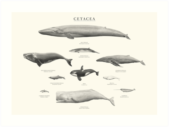 Cetacea by Sam Lyne