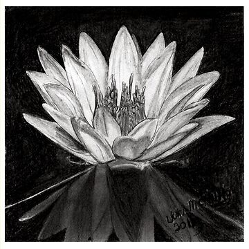 Water Lily by jmac64