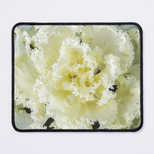 Cabbage close-up photo Mouse Pad