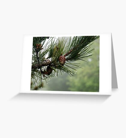 Pine Cones and Dew Greeting Card