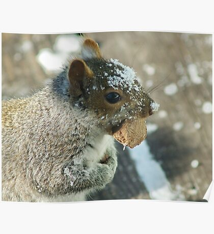 Squirrel with Brazil Nut Poster