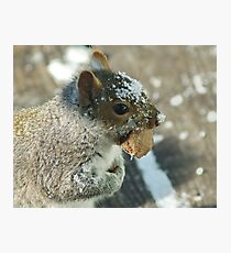 Squirrel with Brazil Nut Photographic Print