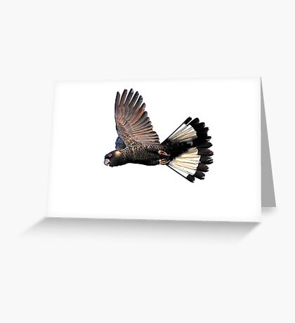 Male Carnaby's in flight Greeting Card