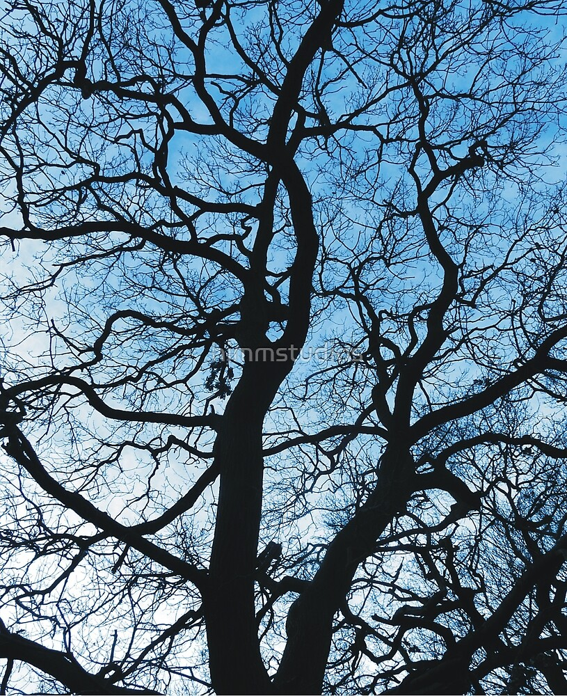 Abstract Winter Tree Silhouette by himmstudios