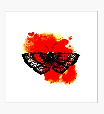 Butterfly in Red Photographic Print