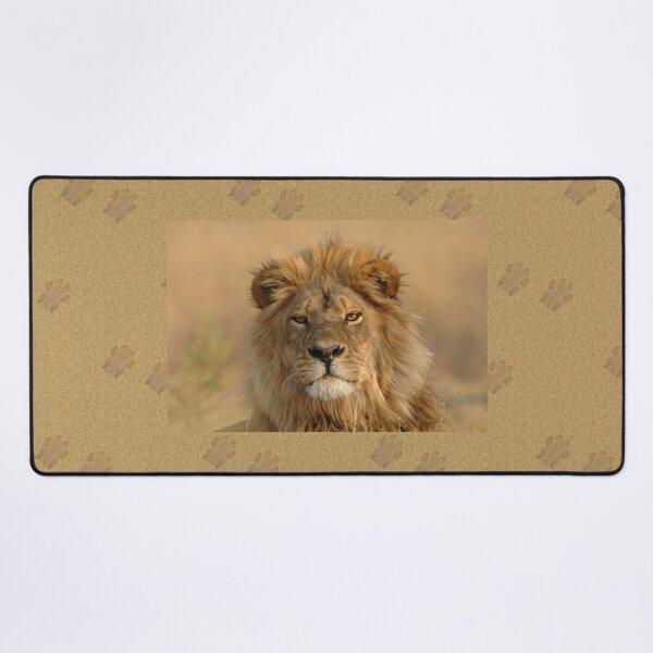 Male Lion staring Desk Mat