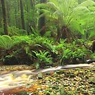 Hebe River Downstream..#2 by phillip wise