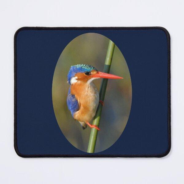 Malachite Kingfisher on reed Mouse Pad