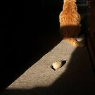 Ginger cat ignoring toy mouse by turniptowers