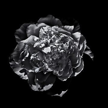 Backyard Flowers In Black And White 19 by learningcurveca