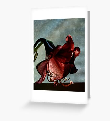 Faded Amaryllis Greeting Card