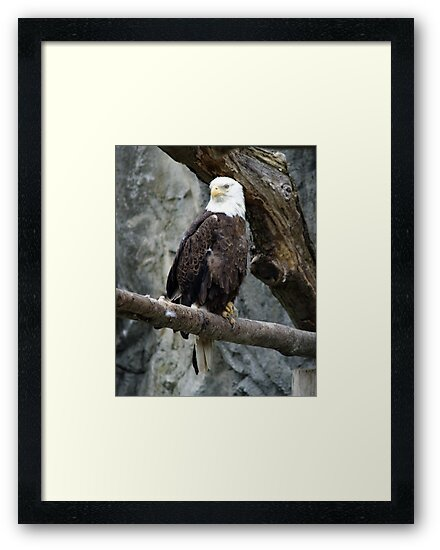 Lone Eagle by Barry Doherty