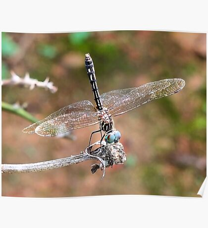 The Little Dragonfly Poster