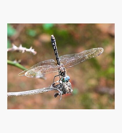 The Little Dragonfly Photographic Print