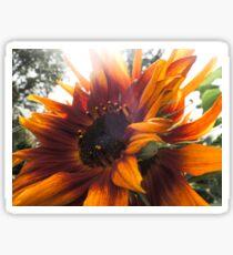 Decorative red sunflower Sticker