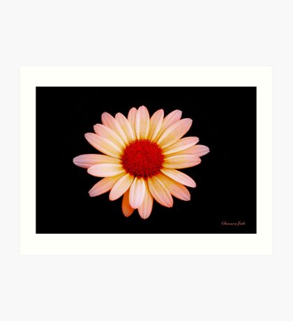 Painted the Color of Sunrise~ Daisy Art Print