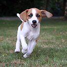 Puppy Bowie by Jo Nijenhuis