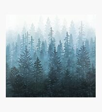My Misty Secret Forest Photographic Print