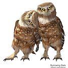 Burrowing Owls by Ken Gilliland
